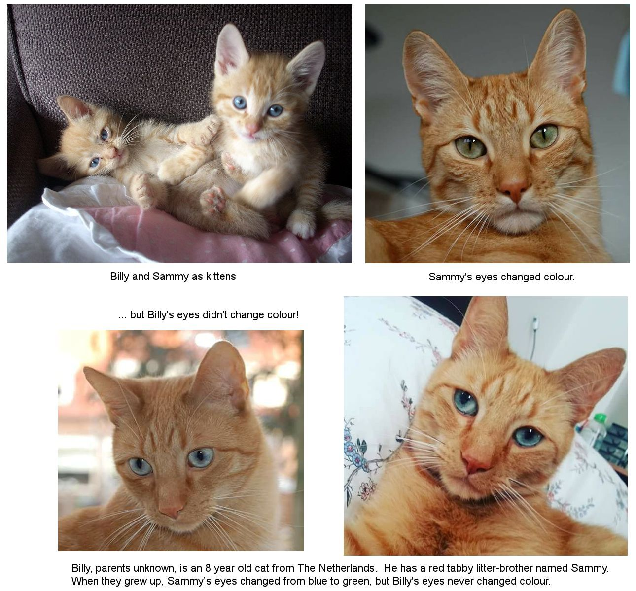 Image Result For Cat With Black Eyes Cat With Blue Eyes White Cats Purple Eyes
