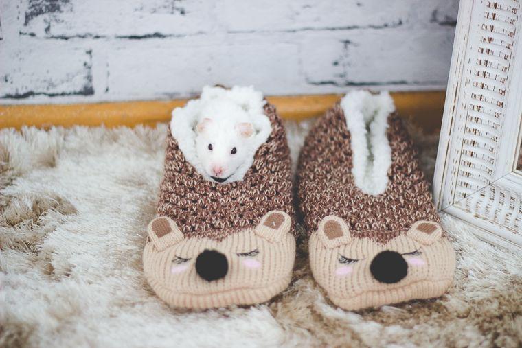 Hamster branquinho chamado Bilbo dentro de pantufas de porco espinho.