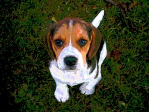 Book Trailer For Shiloh Dogs Baby Beagle Dog Potty Training