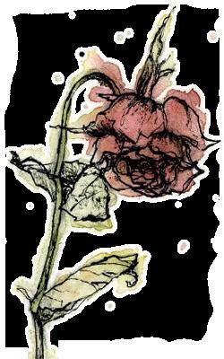 старается увядший цветок рисунок сделать выбор