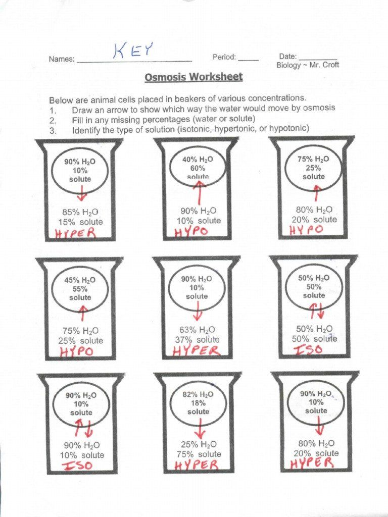 Diffusion And Osmosis Worksheet Answers Osmosis Beaker Key Osmosis In 2020 Worksheets Solving Quadratic Equations Worksheet Template