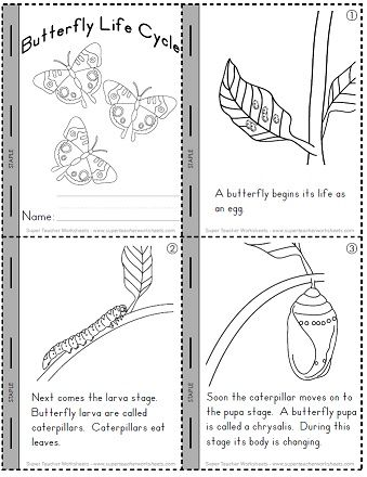 Worksheets Butterfly Life Cycle Worksheet check out our worksheets to help students learn about the butterflys life cycle stages