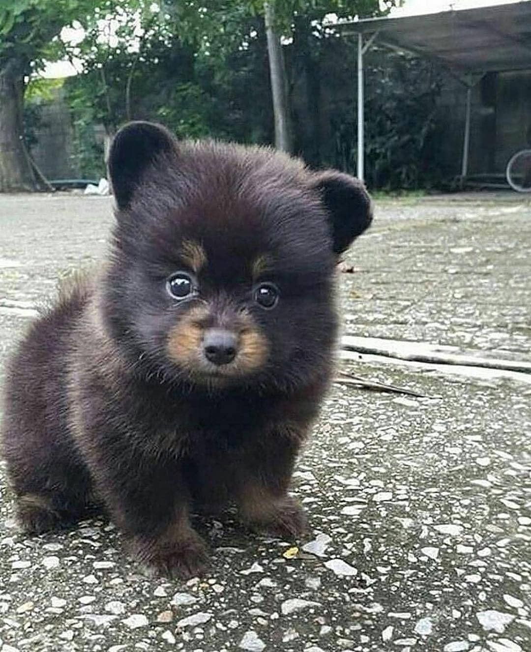 Dog Or Bear Follow Animalonplanet For More