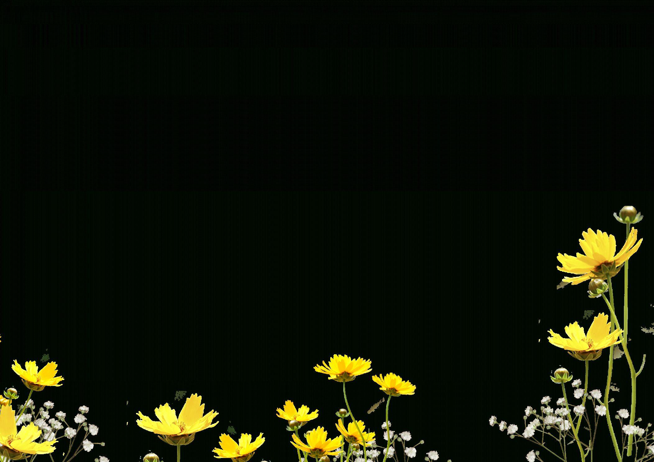 12 Flower Overlays Png