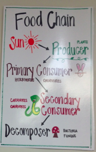 Here's a nice food chain anchor chart. Fourth grade