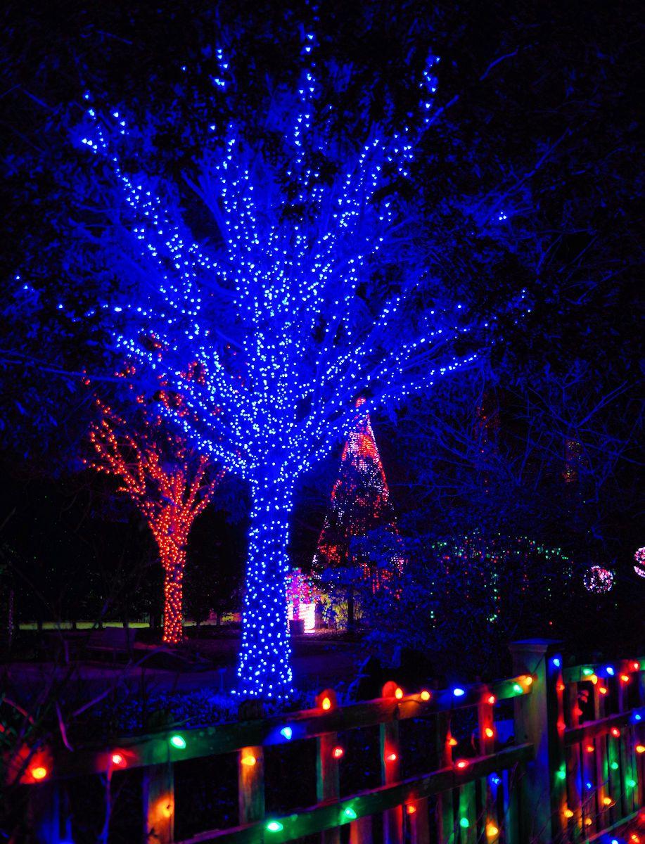 Winter Lights at NC Arboretum in Asheville Winter light