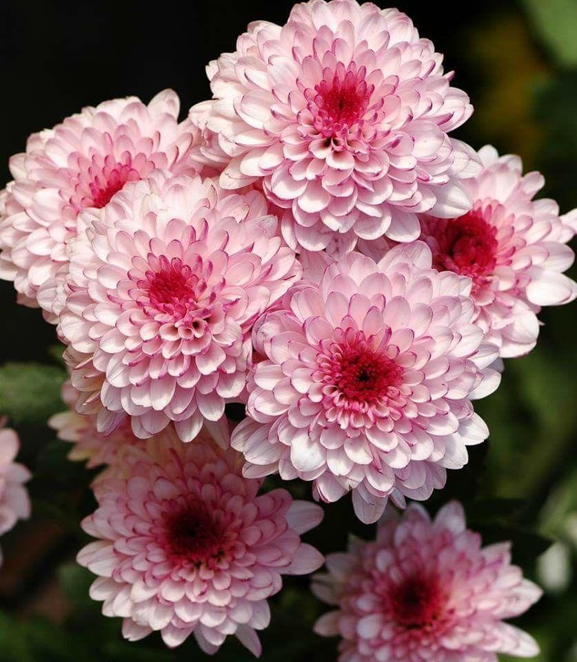 Floraufaunaflowersuplants plants and flowers pinterest