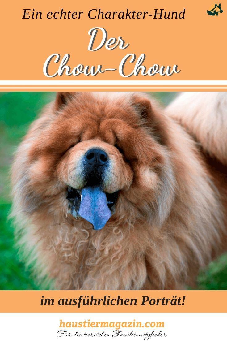 Chow Chow Steckbrief Mit Fci Klasse Und Mehr Haustiermagazin In 2020 Hunde Rassen Hunderassen Hunderasse