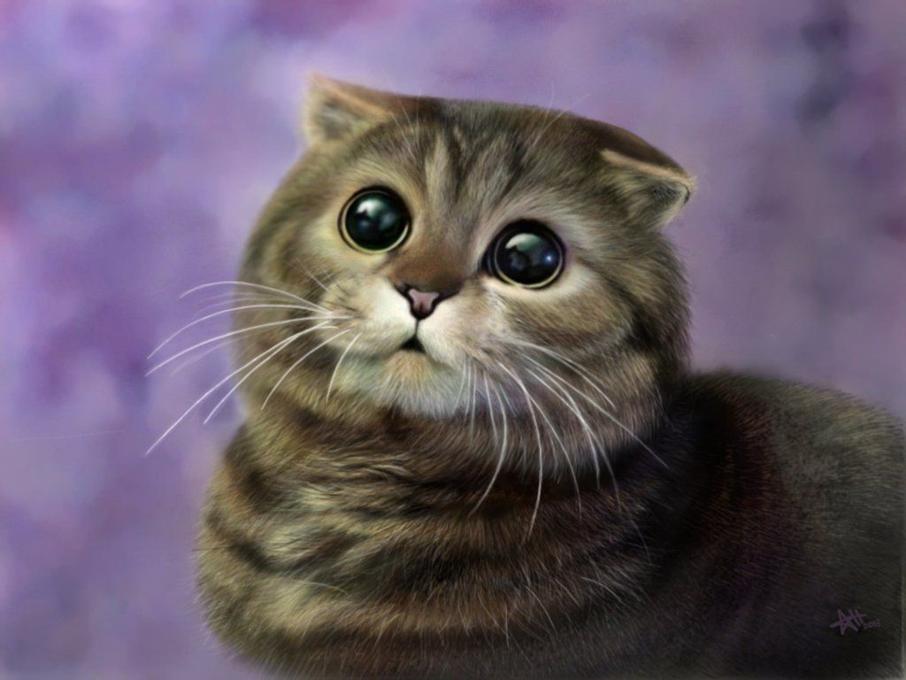 Cute Scottish Fold Cat Scottish Fold Cats Wallpapers
