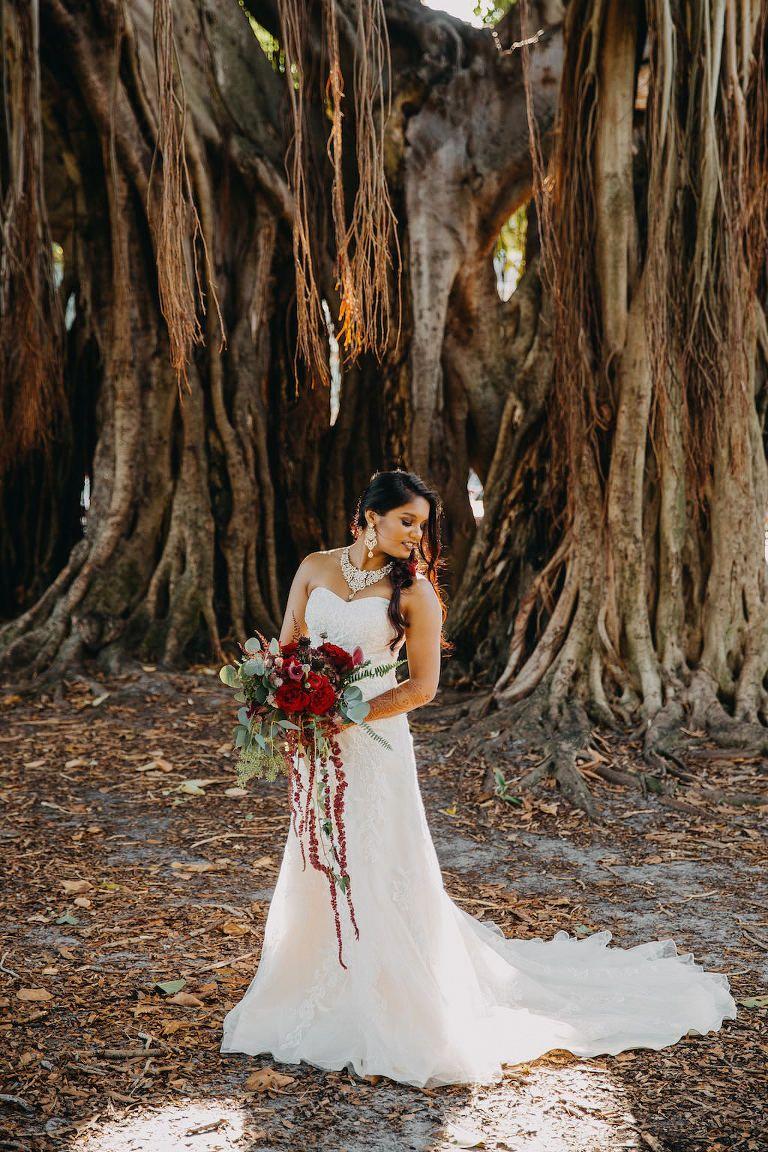 Moderne Indische Braut Hochzeit Porträt Unter Banyan Tree mit ...