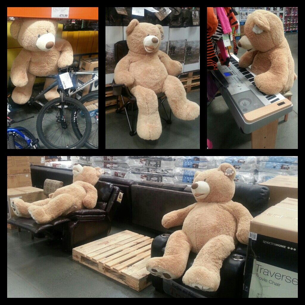 My Brother And I Initiated What We Called Bear Ops At Costco Yesterday And I Think The Mission Was Highly Successful Costco Bear My Teddy Bear Bear [ 1024 x 1024 Pixel ]