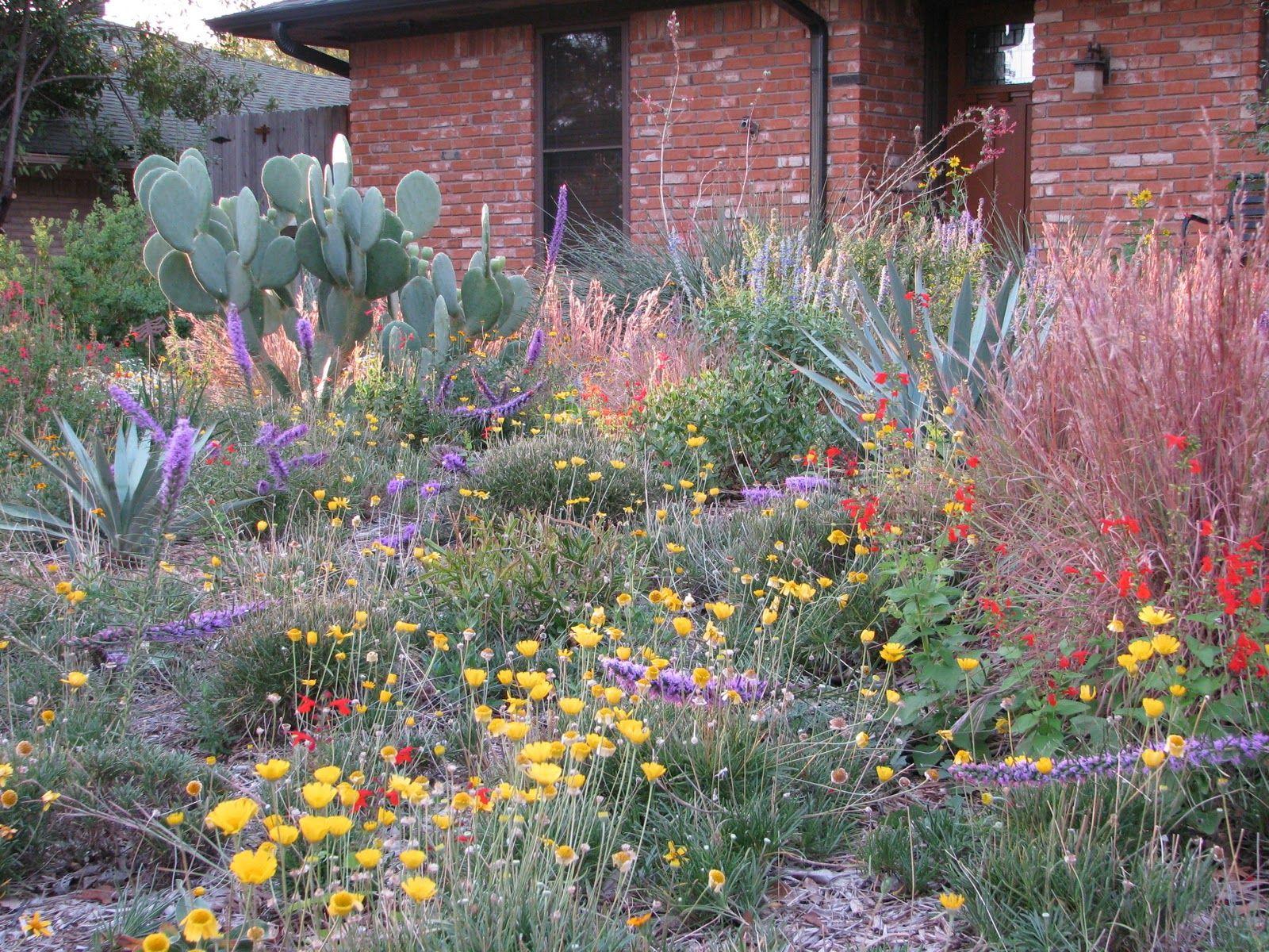Texas native plant garden designs sorghastrum nutans for Garden design texas