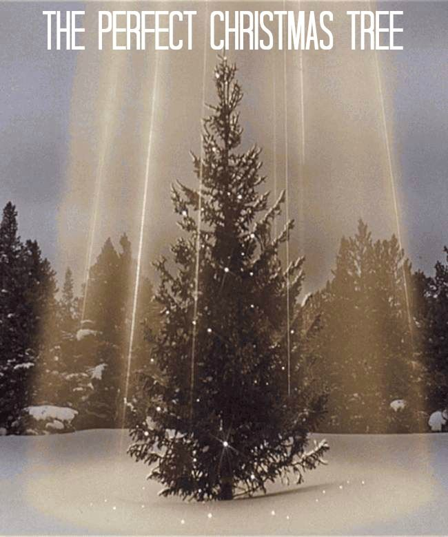 Do You Use A Real Or Fake Christmas Tree Here S Some Tips From A Pennsylvania Tree Farmer On How Christmas Tree Gif Fake Christmas Trees Christmas Pictures