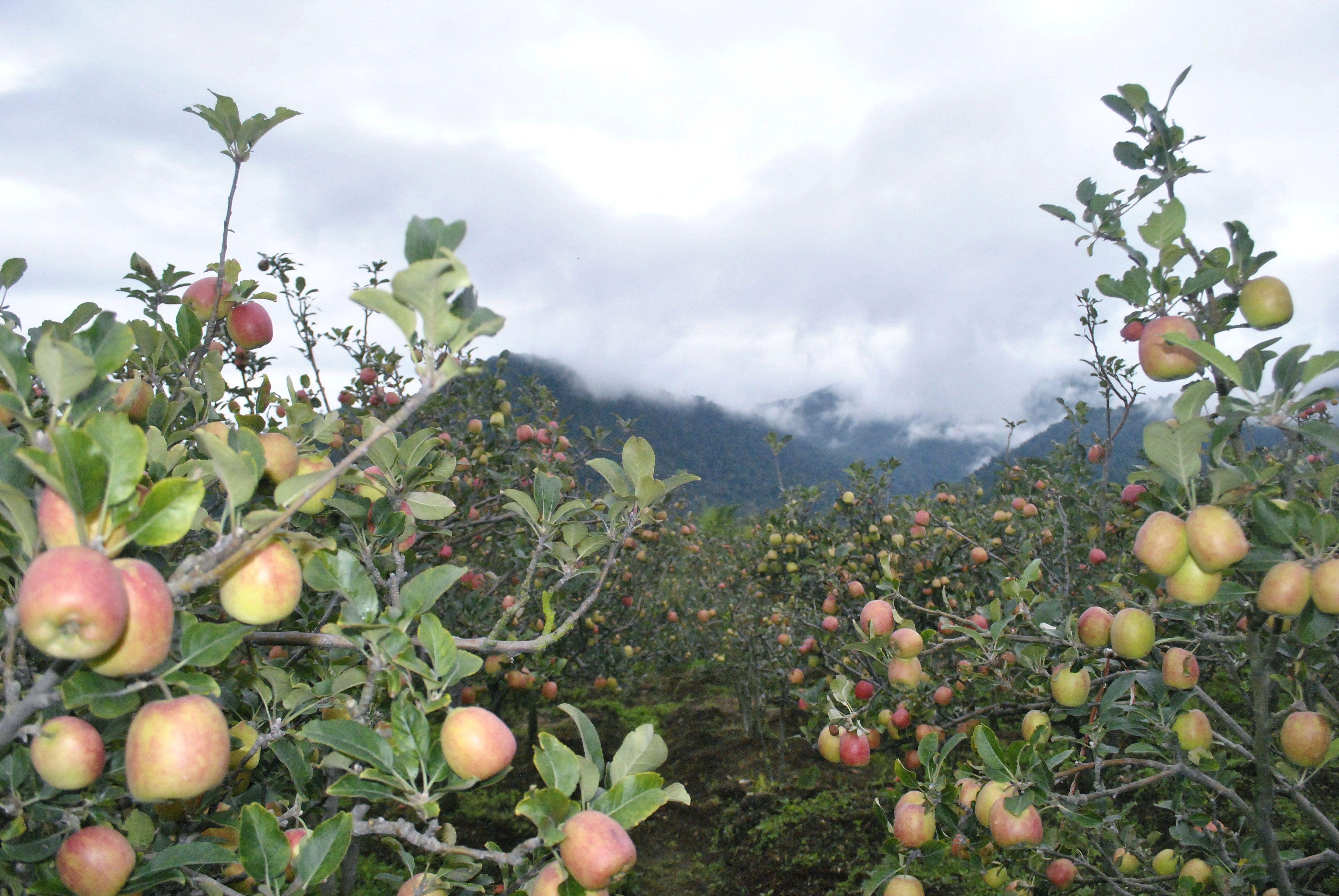 Perkebunan Apel Malang