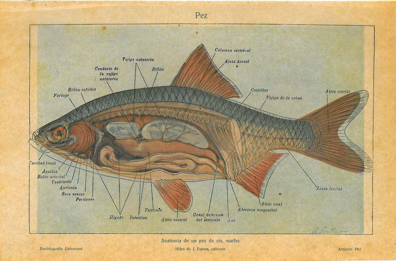 anatomy vintage books pdf - Google Search | Fish | Pinterest ...