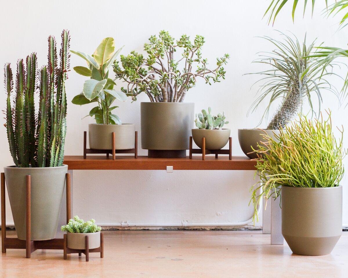 Indoor Plant Pots