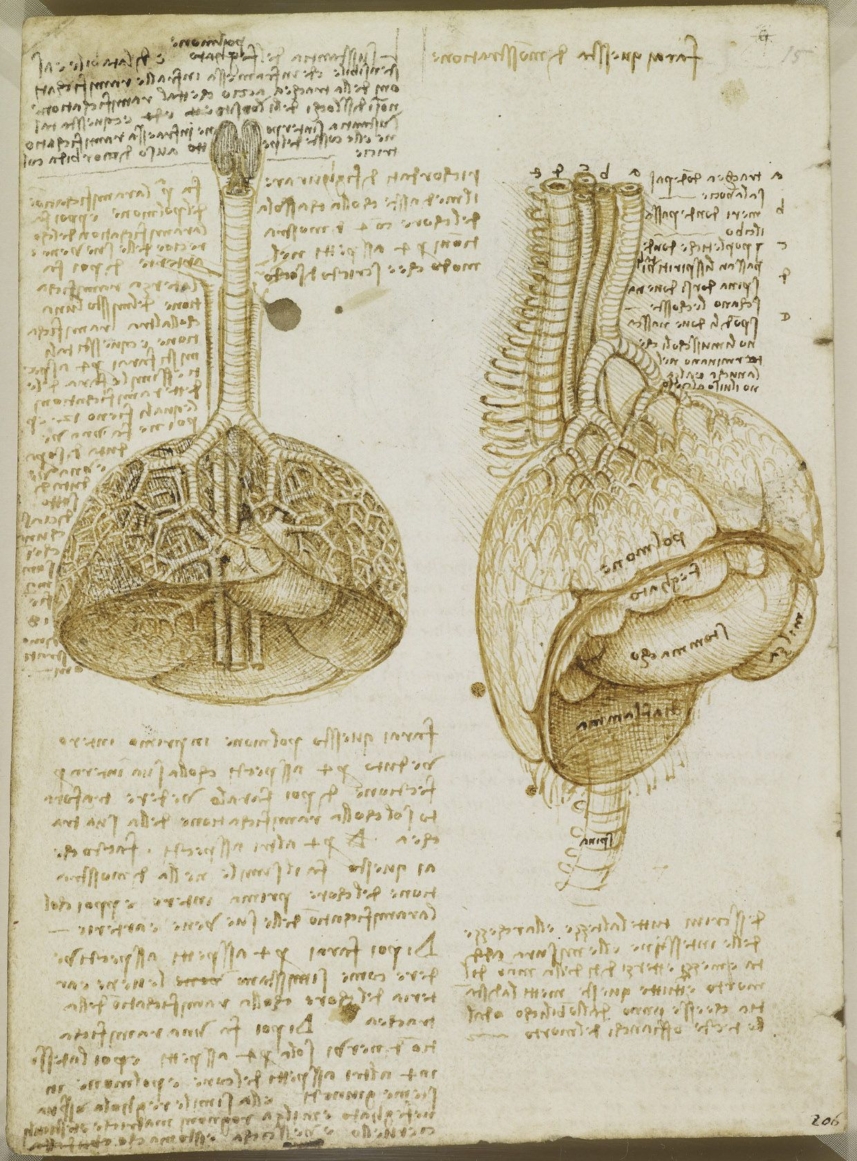 Leonardo da Vinci, 1452-1519, Italian, The lungs, c.1508. Pen and ...