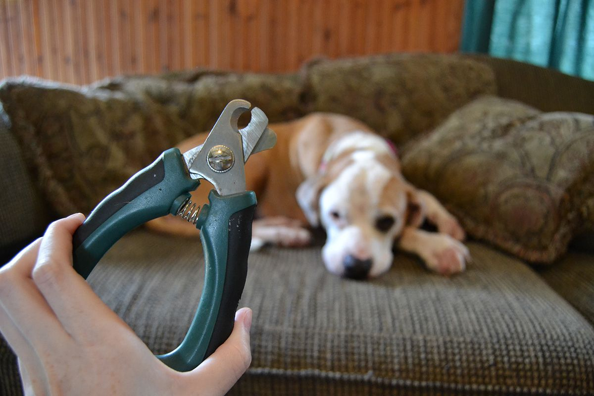 6 Nail Trim Tips And Tricks For Dogs Who Hate Them | Pup