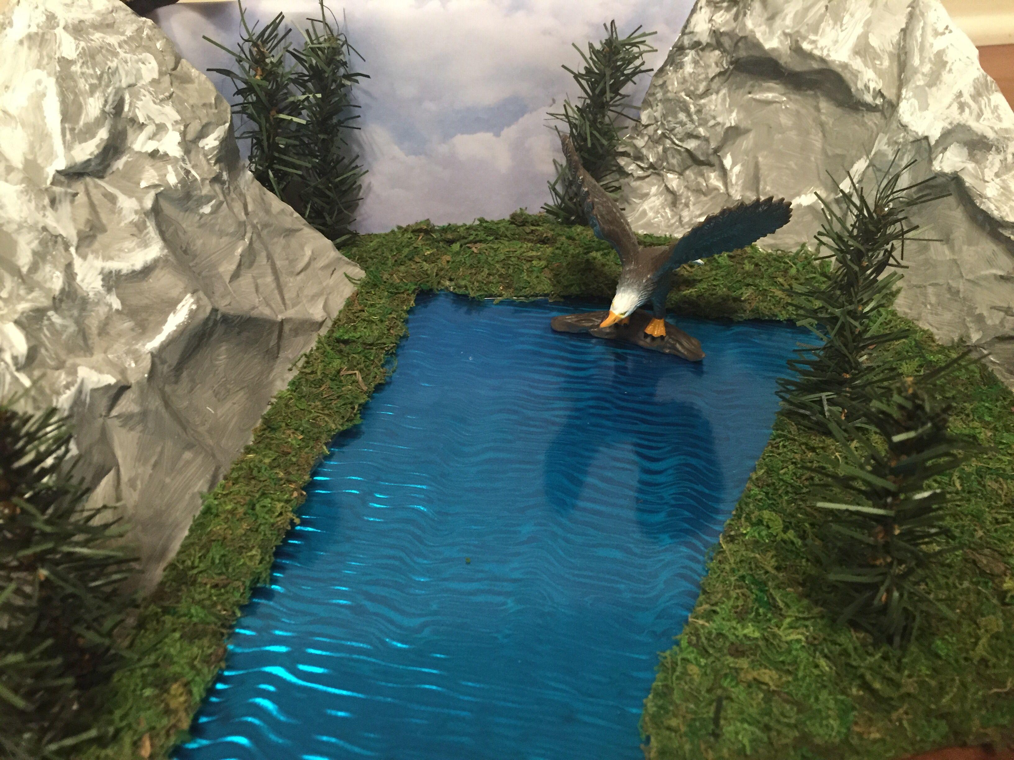 Bald Eagle Habitat Diorama