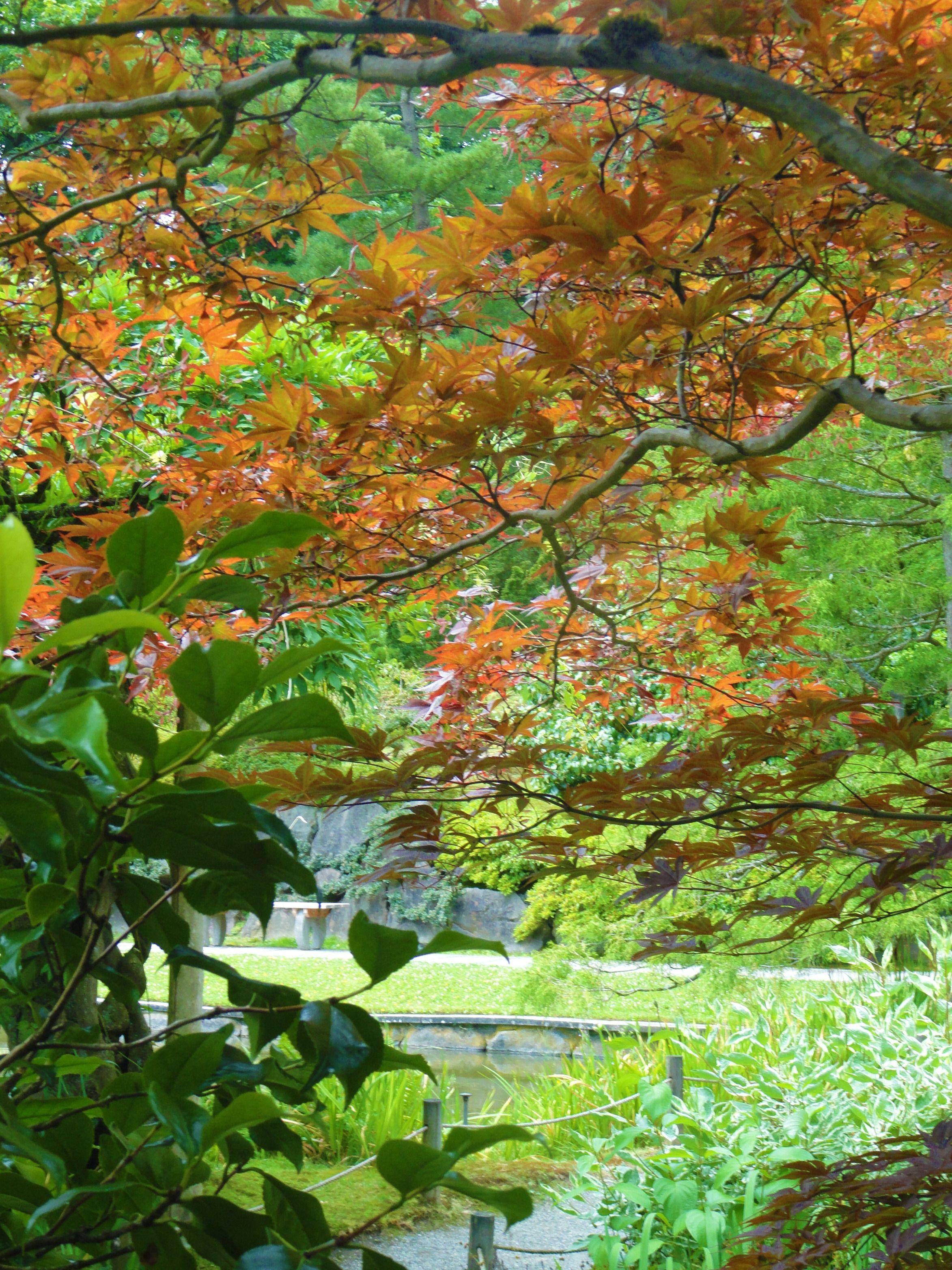 Japanese Garden in Seattle Arboretum