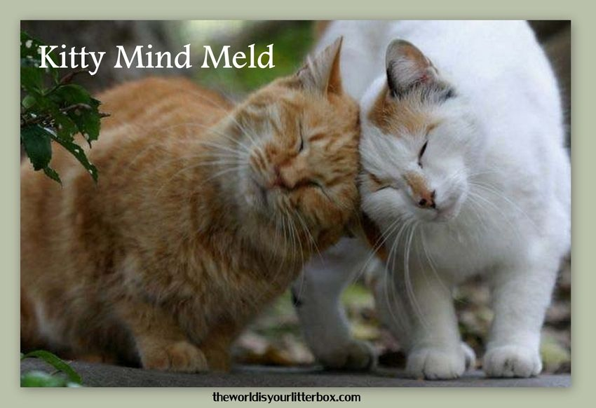 Kitty Mind Meld Cat love, Cute animals, Crazy cats