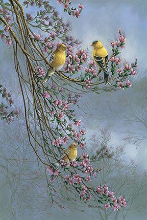 Gold Finches Canvas Art Print by Wanda Mumm