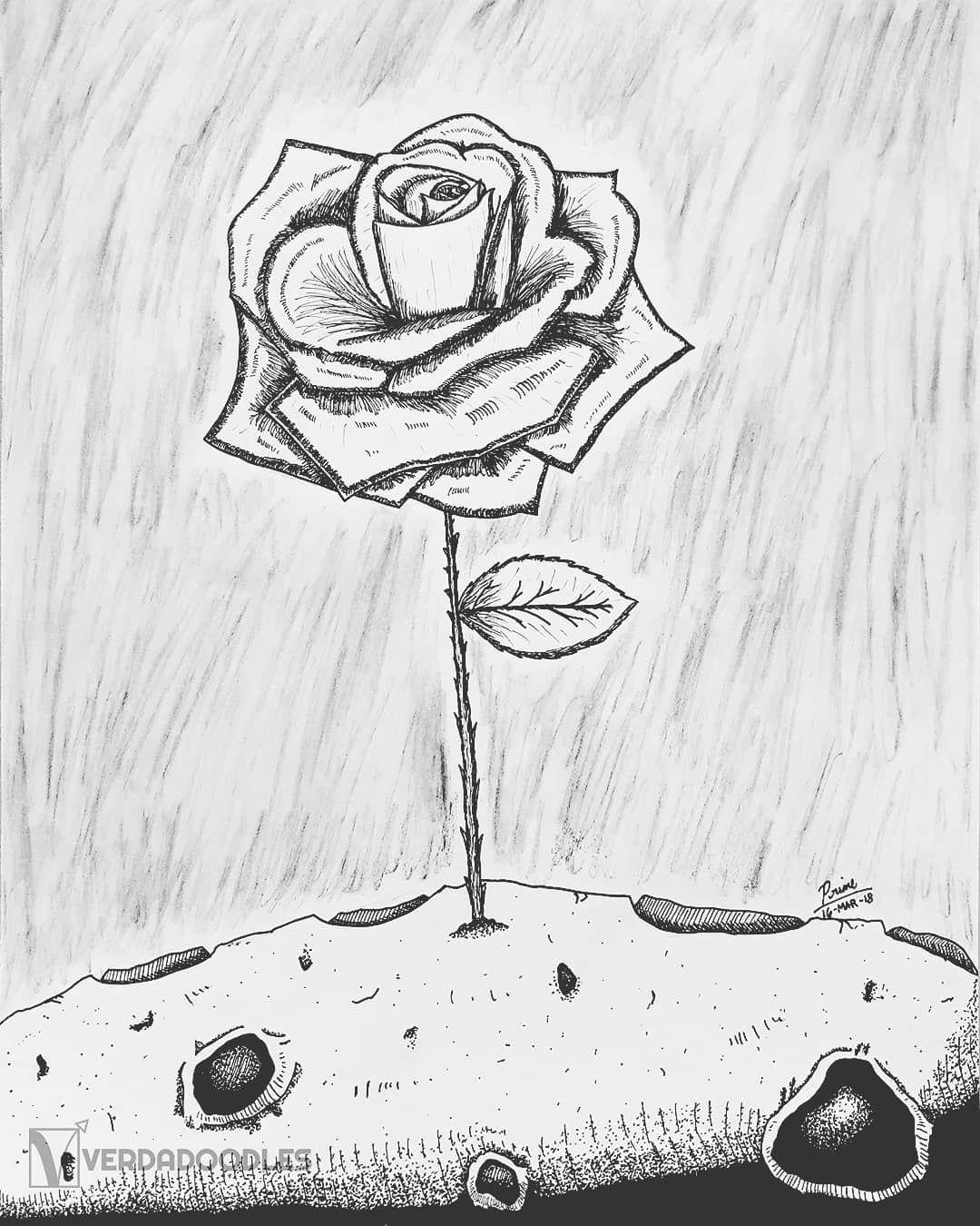 Роза из маленького принца картинки для срисовки