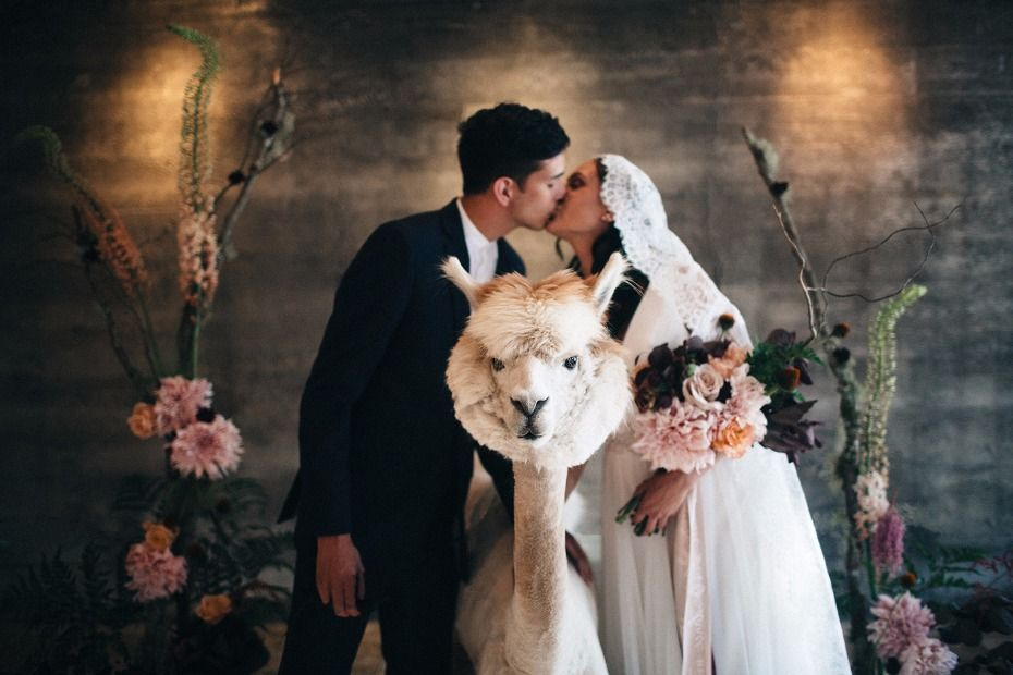 Modern Vintage Wedding Ideas With Three Adorable Alpacas Unique Wedding Photography Modern Vintage Weddings Fun Wedding Photography
