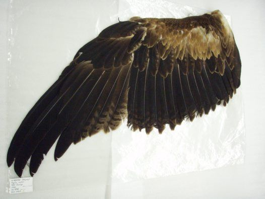 if i had the wings of an eagle