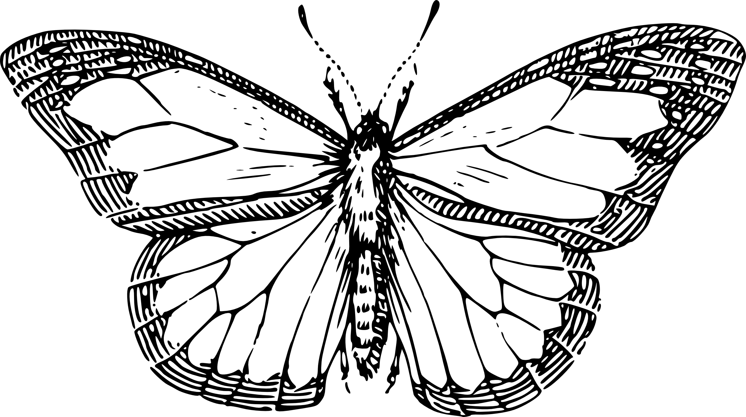 Best butterfly clipart black and white 15170 clipartion