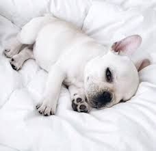 Image Result For Tumblr Puppy White Aesthetic Puppies Animals Baby Animals