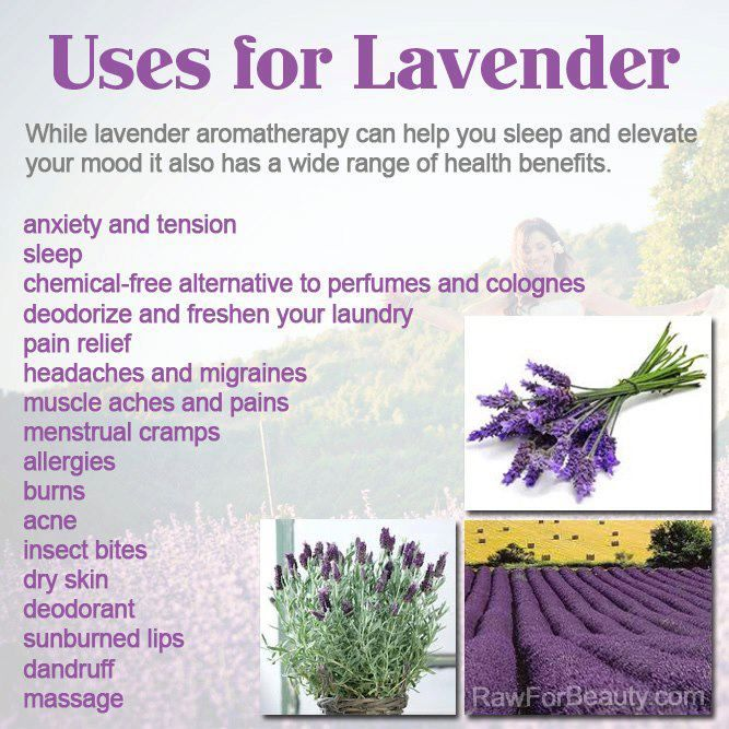 Lavender Scented Oil Is Very Popular During A Massage Because Of Its Relaxing Fragrance But Did You Know It A Lavender Benefits Lavender Aromatherapy Lavender
