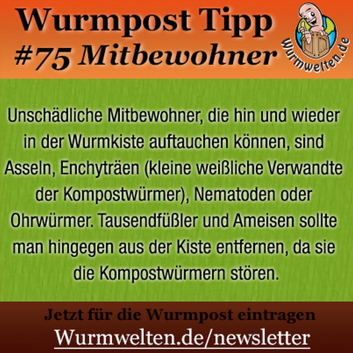 Bit.Ly/Buecher-Wuermer