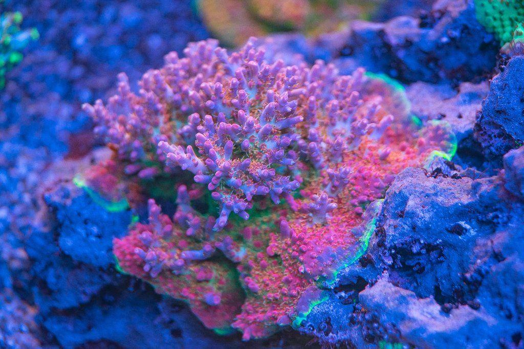Vivid Aquariums Confetti Vivid Shimmer Lights Confetti