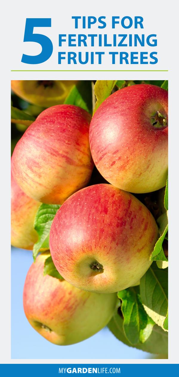 5 Tips For Fertilizing Fruit Trees My Garden Life Fertilizing Fruit Trees Fruit Trees Outdoor Plants