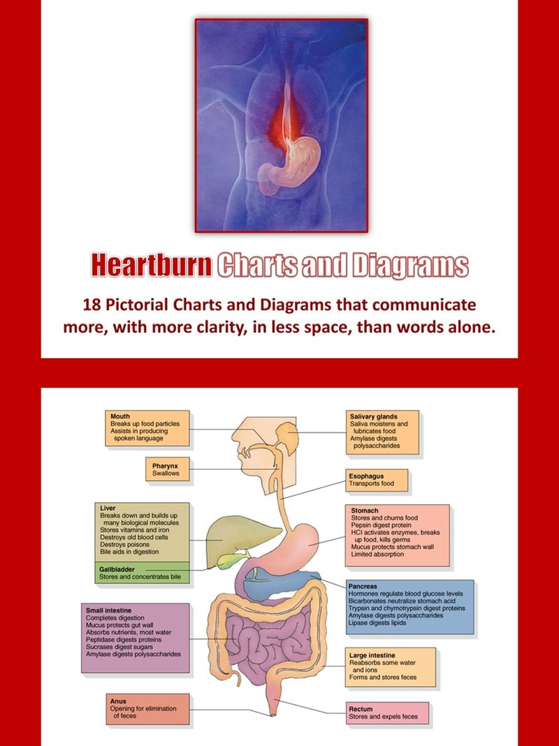Heartburn Charts and Diagrams with Private Label Rights  18