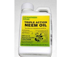 Triple Action Neem Oil By Southern Ag 15 49 Hid Hut Is Pleased To Offer Triple Action Neem Oil One Of The Safest And B Neem Oil Fungicide Organic Fungicide
