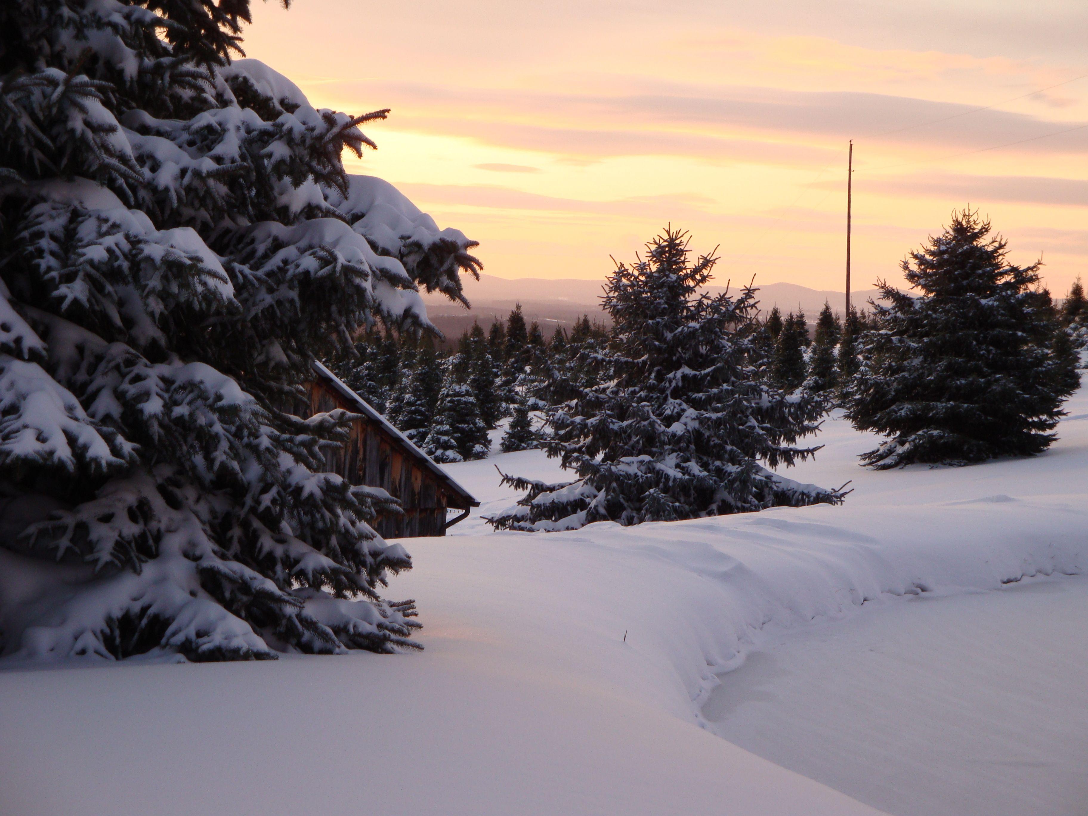 Sunrise Snickers Gap Tree Farm Tree Farms Snowy Trees Christmas Tree Farm