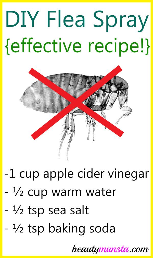 eb934e0c66be34f5d2311af6a9a5dfa9 - How To Get Rid Of Fleas Organically In Your House
