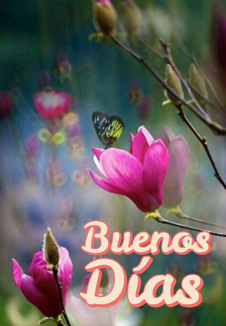 Buenos dias | Flores de amor, Flores bonitas, Árboles en flor