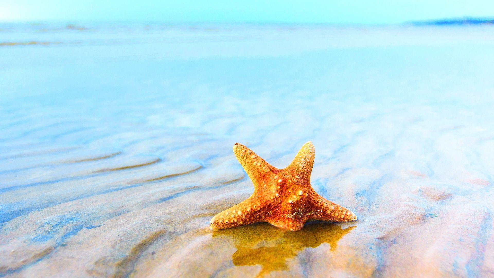 Picture Sea Stars Underwater World Animals