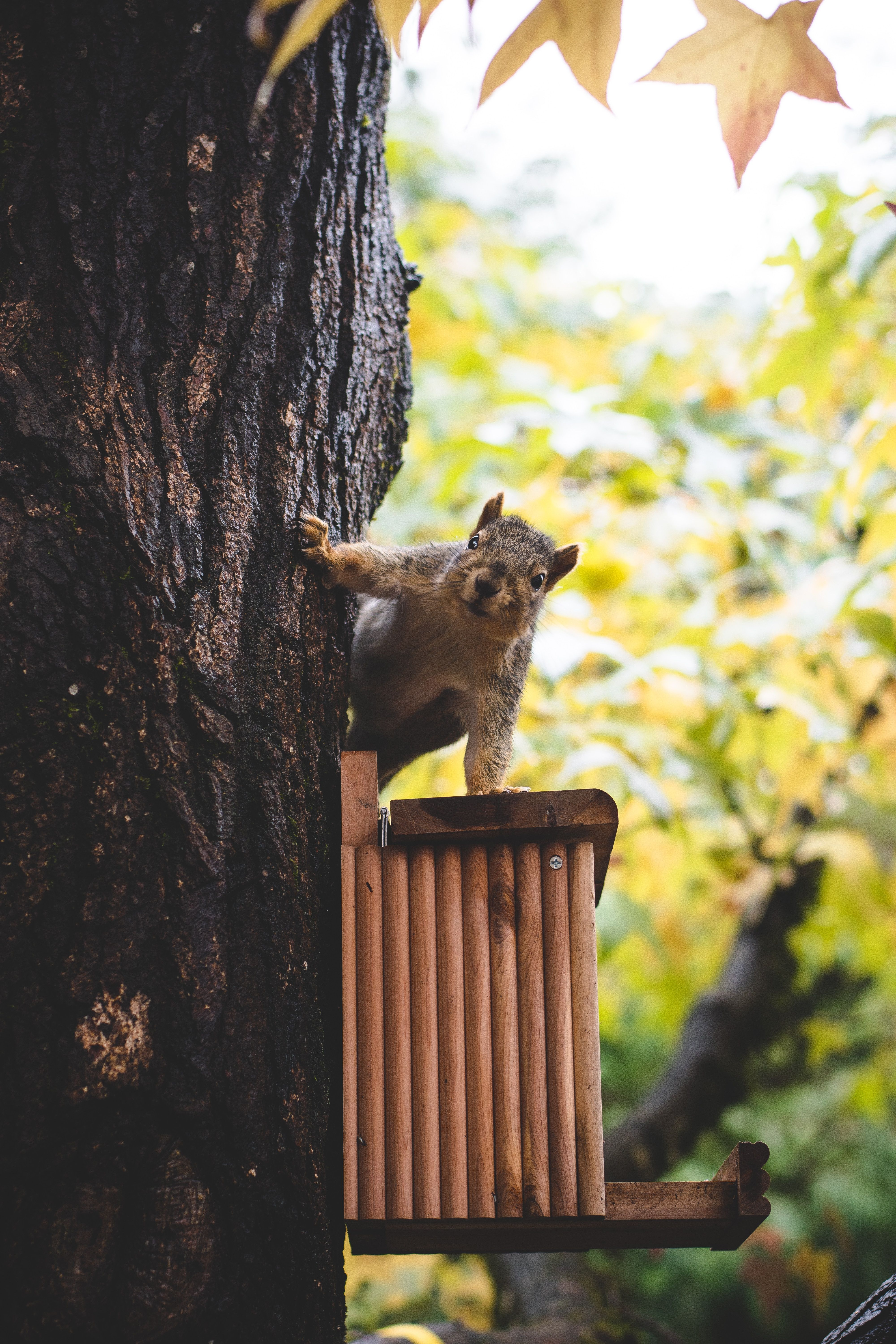Can squirrels damage your home wild animals pictures
