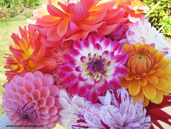 Garden dahlia bouquet | Flowers | Pinterest | Dahlia ...