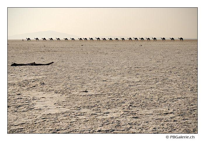 Danakil, caravane de dromadaires, sel, Afar, Ethiopie - pbhgalerie.ch