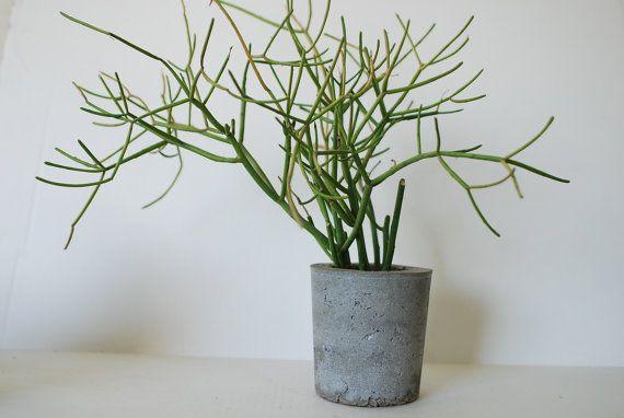He encontrado este interesante anuncio de Etsy en https://www.etsy.com/es/listing/153687400/concrete-planter-eco-friendly-home-decor