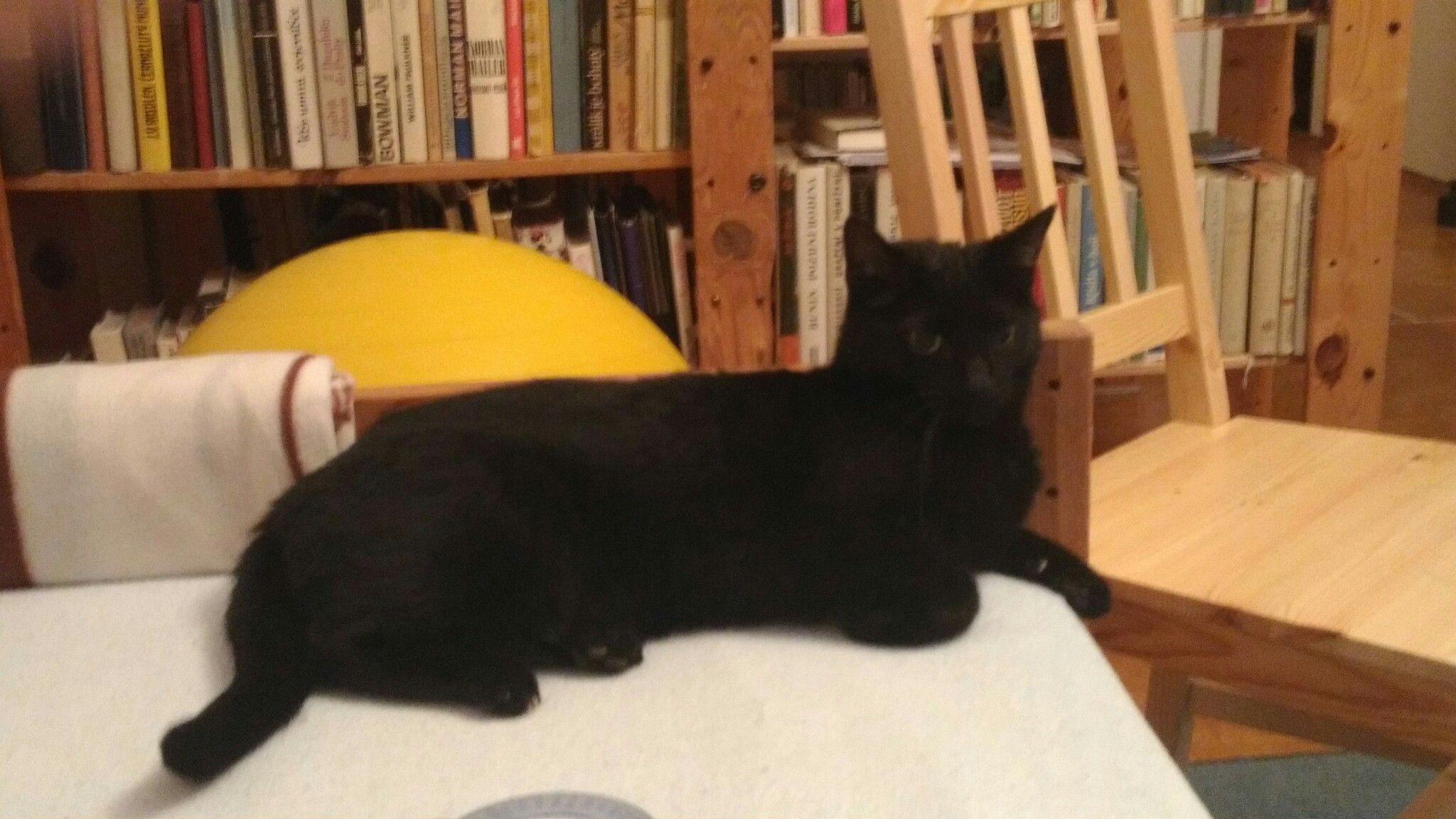 My tomcat...