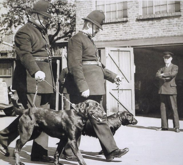 The Metropolitan Police S First Ever Police Dogs Taken For
