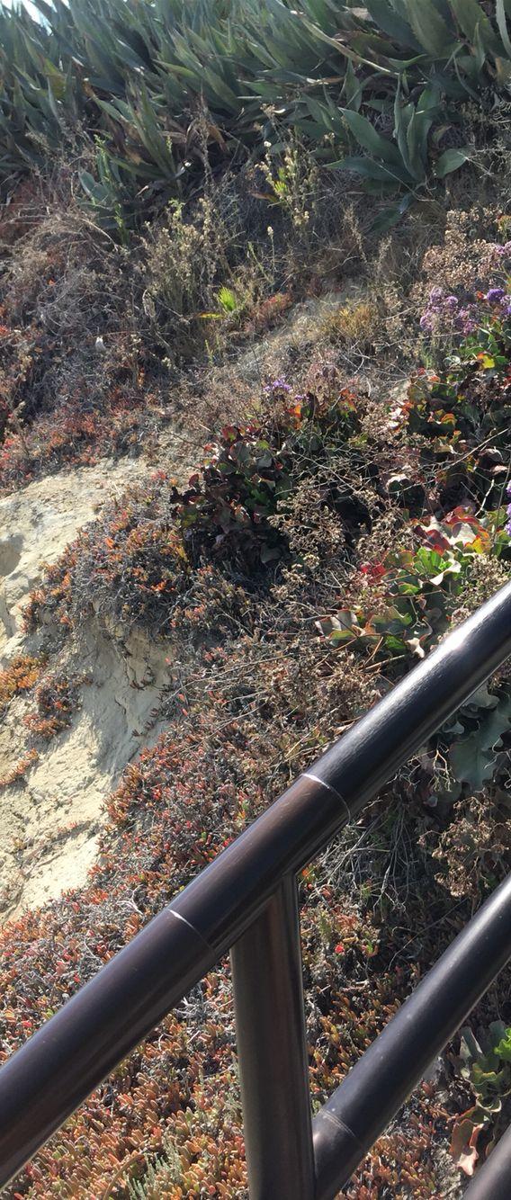 La Jolla California plant life 7/2015