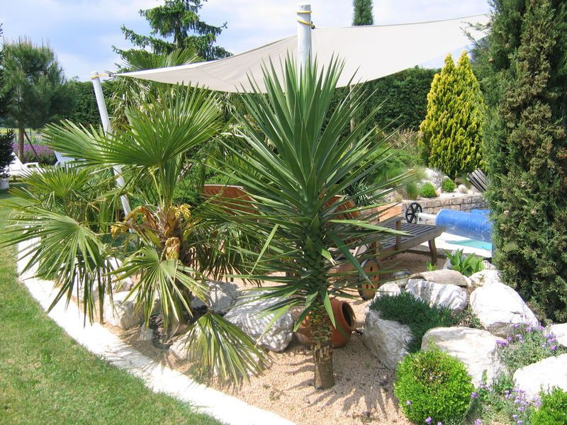 amenagement jardin avec palmier best of