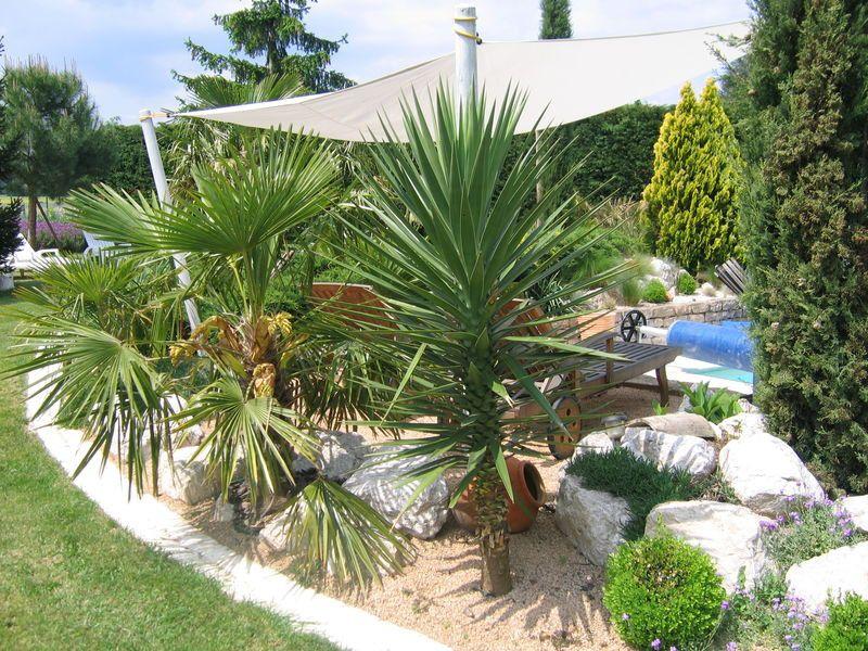 amenagement jardin avec palmier best of